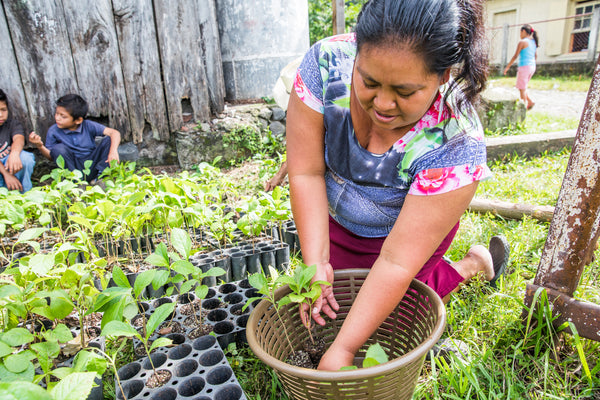 one tree planted project in Guatemala