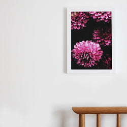 Our dahlia daze floral art print available unframed in A4 and A3