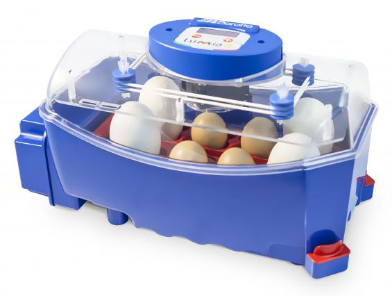 Which is the best egg incubator to buy in Australia?