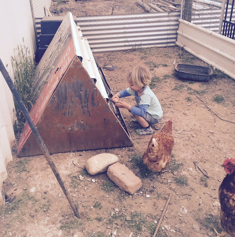 boy collecting chicken eggs