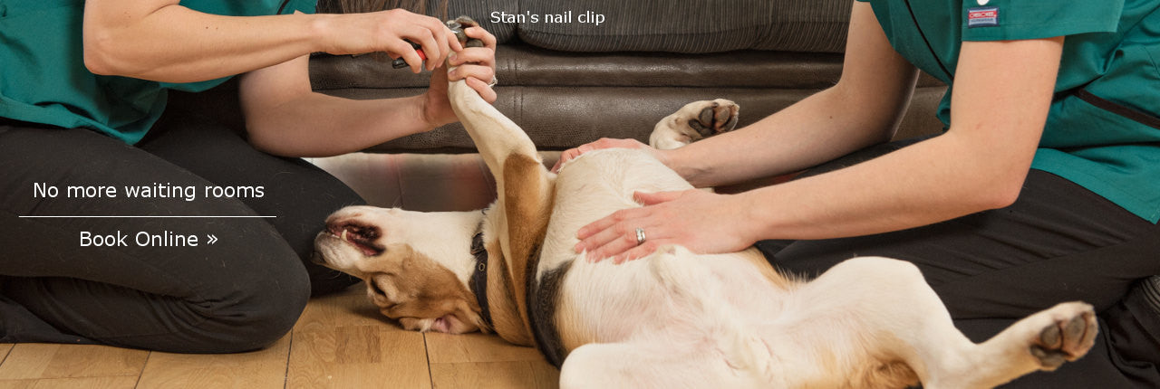 Stan's Nail Clip - Book Online