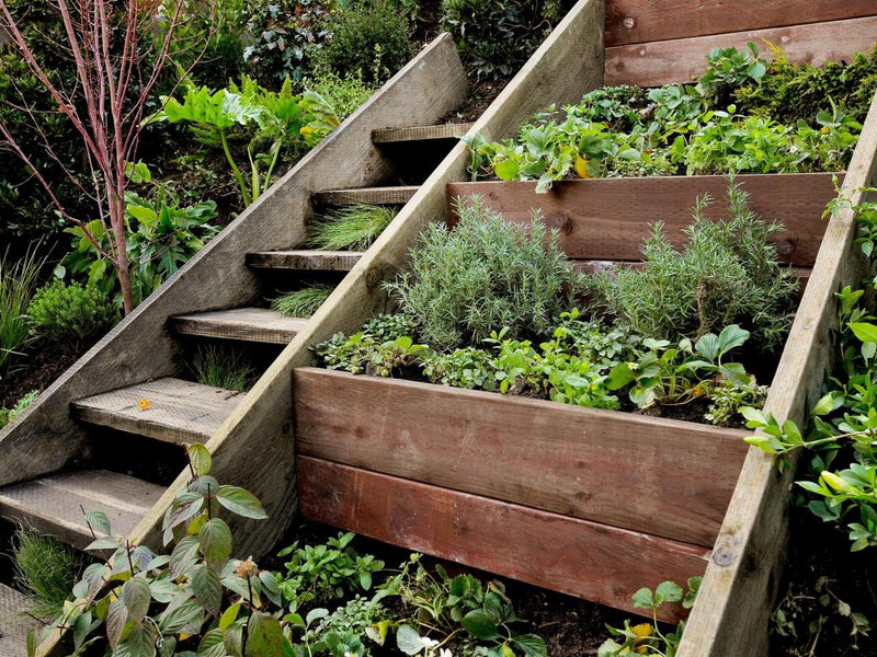 Steps To Success With Organic Gardening