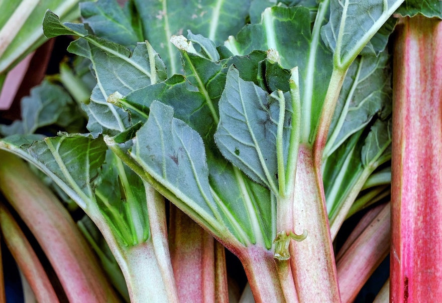 Bakedin Best May Bakes Rhubarb