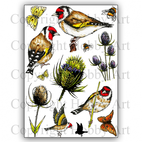 Hobby Art Stamps - Clear Polymer Stamp Set - A5 - Goldfinch & Teasels