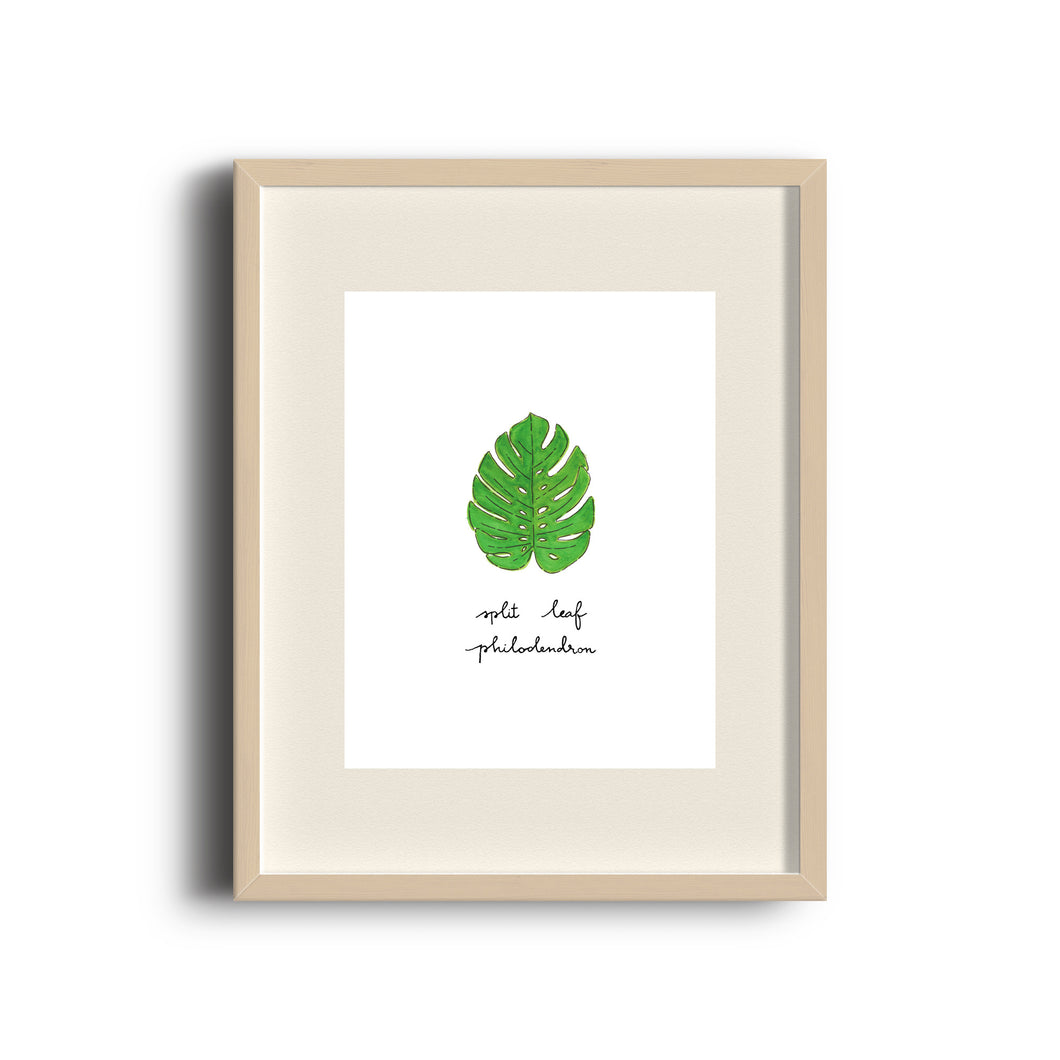 Split Leaf Philodendron Art Print