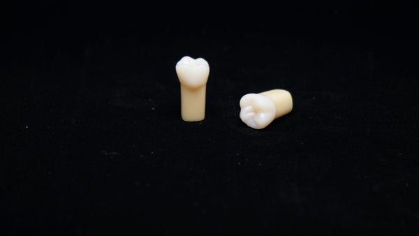 A20AN-200#3 (1.6) Upper Right 1st Molar Composite Resin with Natural Hardness Kilgore Teeth Nissin-A20AN-200#3-Kilgore Int