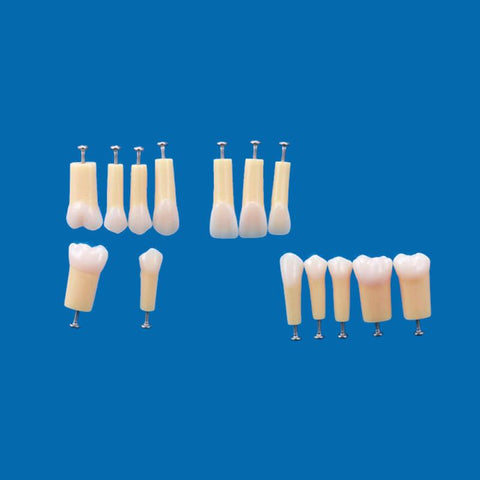 A20AN-200#5 (1.4) Composite Teeth (Hard enamel/Soft Dentin) Natural Hardness-A20AN-200#5-Kilgore Int
