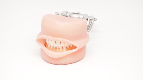 Typodont Soft silicone gingivae with Oral Cavity & Plates Kilgore Nissin-D95SDP-200-GUB-MF-OCC-Kilgore Int