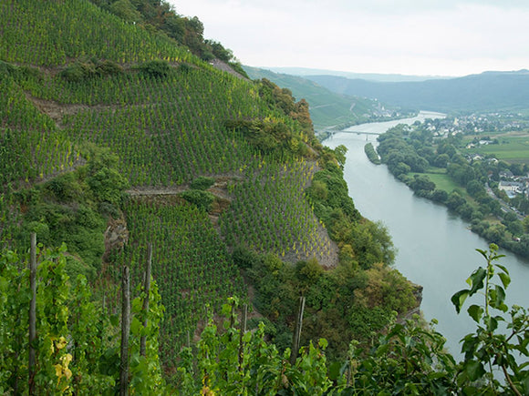 The truth about Riesling - it is rarely ultra sweet