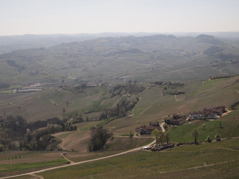 New Langhe Nebbiolo from top producer