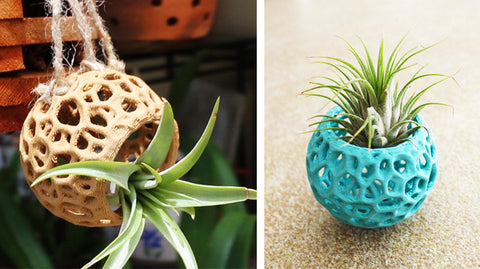 Kokedama Air Plant Holder