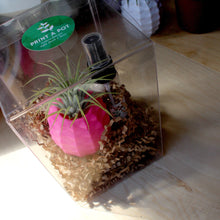 Pineapple Pot + Air Plant Gift Box