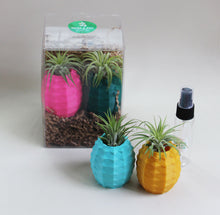Double Pineapple Pot Gift Boxes