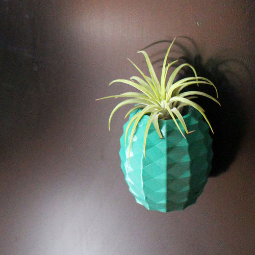 Magnetic Pineapple Air Plant Holder