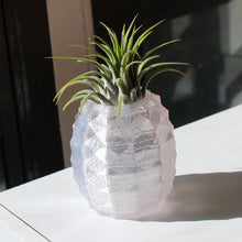 Crystal pineapple air plant holder