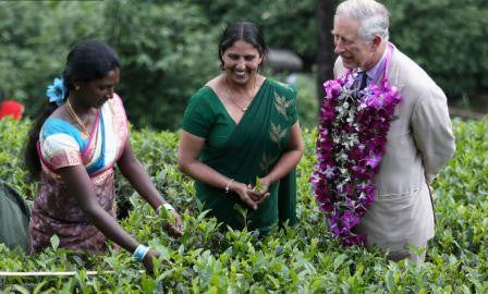 Sri Lanks's Mackwoods Builds on its Reputation as a Tea Pioneer