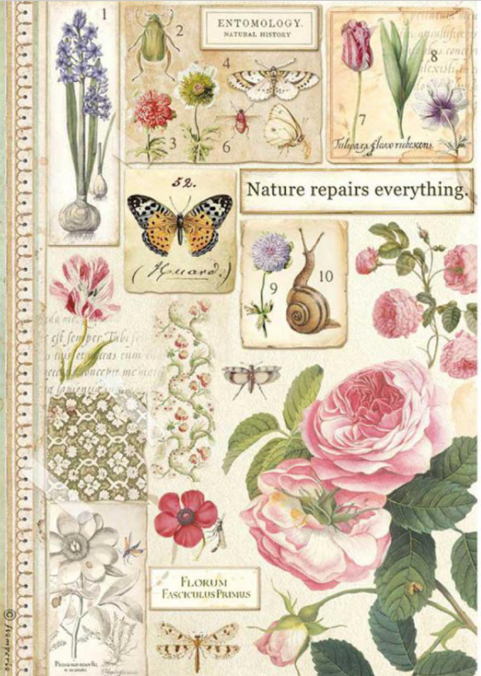 New Stamperia A4 Decoupage  Rice Paper  Botanic DFSA4623, Arts & Crafts by The Craft House