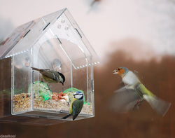 Classikool Large Acyrlic Bird Feeder for Fat Balls & Seeds (Suction Cups)