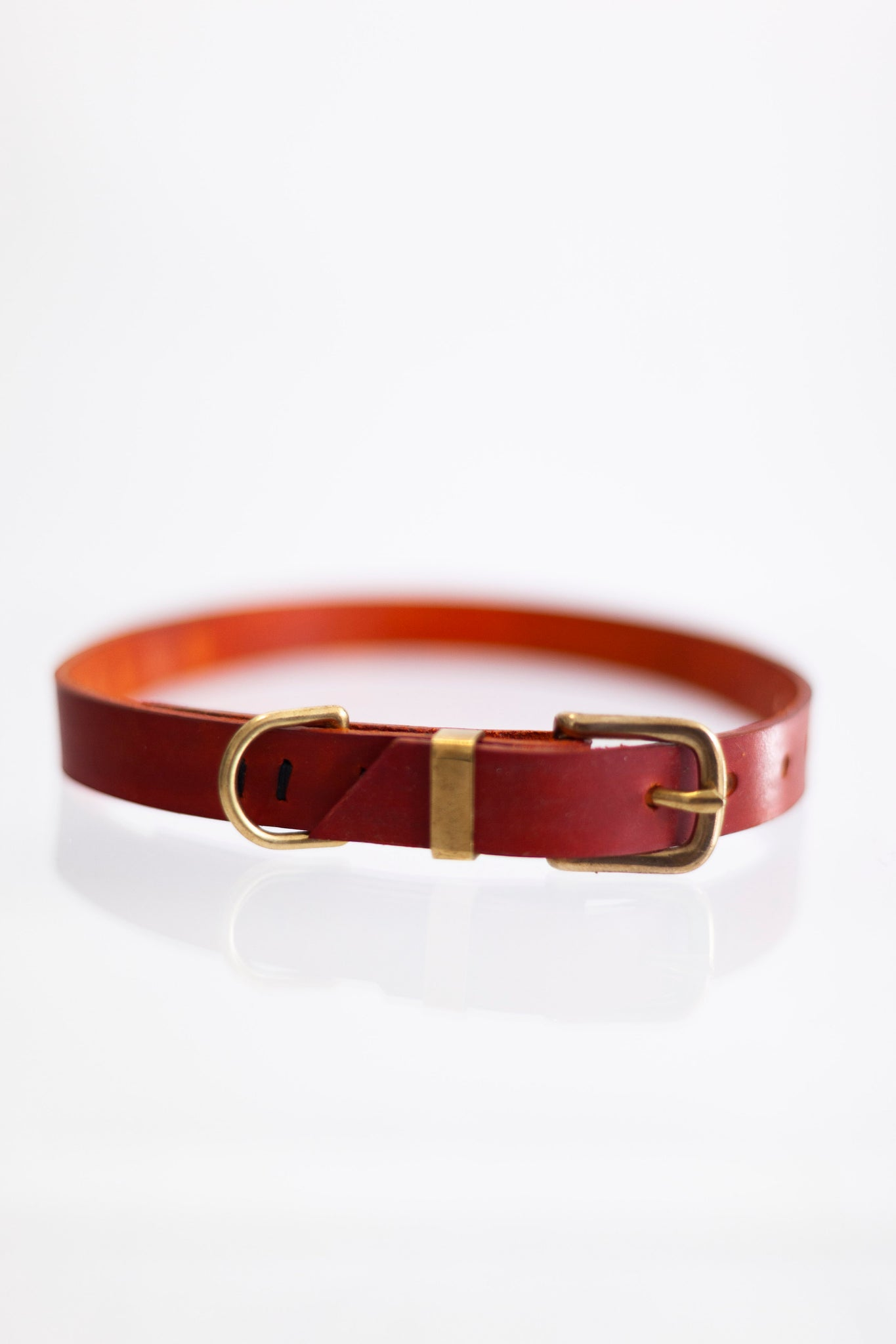 Dog Collar Rust