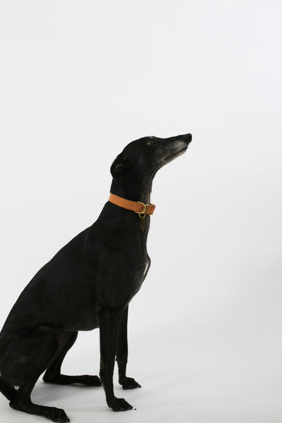 Dog Collar Natural