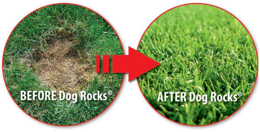 Save Your Grass with Dog Rocks