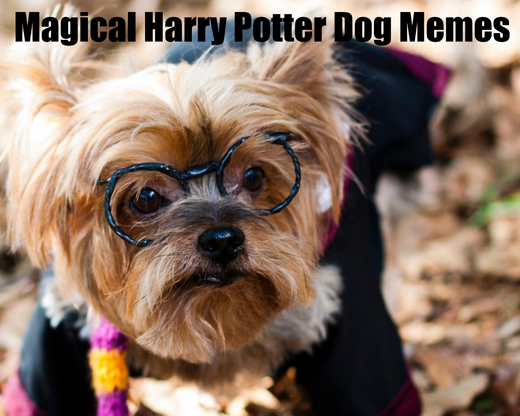 Magical Harry Potter Dog Memes
