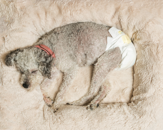 Doggy Diapers 101