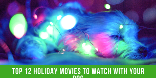 Top 12 Holiday Movies to Watch with Your Dog
