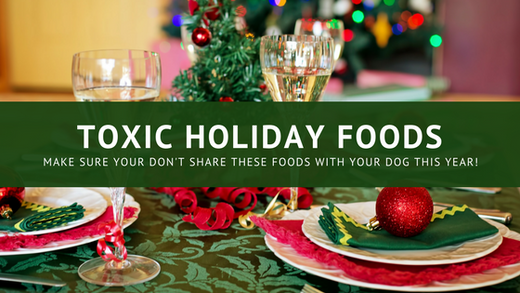 Holiday Foods That Are Toxic To Dogs