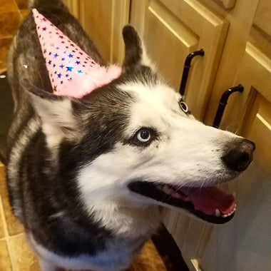 Large Pink Dog Birthday Hat
