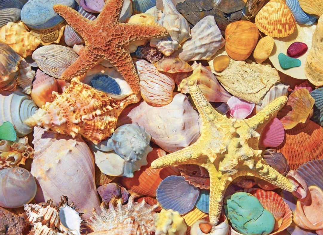 Beach Shells 550 Piece Jigsaw Puzzle by White Mountain Puzzle
