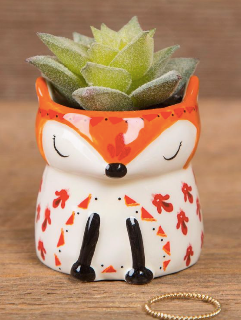 Mini Fox Succulent