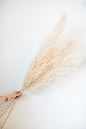Open image in slideshow, Pampas Grass Bunch