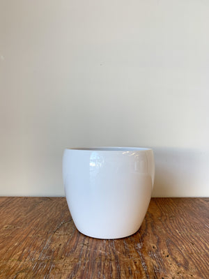 Open image in slideshow, Corban Pot 6.25x6.25