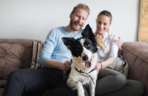 couple relaxing on couch with dog