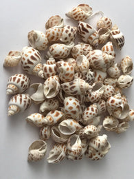 100 grams Natural Seashell Beads 4S