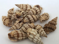100 grams Natural Shell Beads 7S