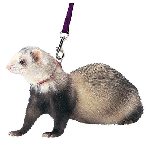 "Marshall Pet - Ferret Harness & Lead Combo Red - 48"" Long"