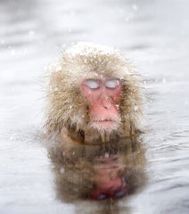 relaxing monkey
