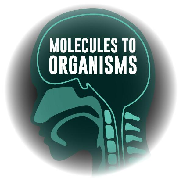 Virtual Reality Science At-home Tutor: Molecules to Organisms (6LS)