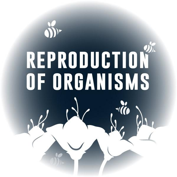 Virtual Reality Science At-home Tutor: Reproduction of Organisms (6LS)