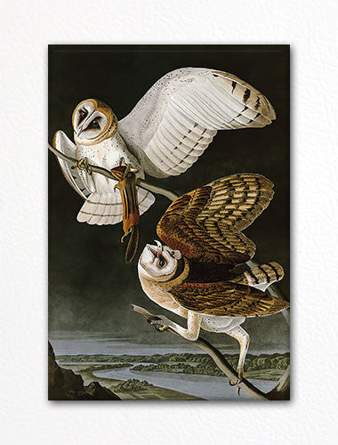 Barn Owl Audubon Illustraion Fridge Magnet