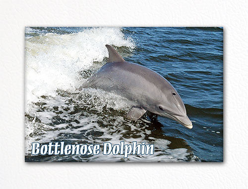 Bottlenose Dolphin Fridge Magnet