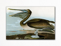 Brown Pelican Audubon Illustration Fridge Magnet