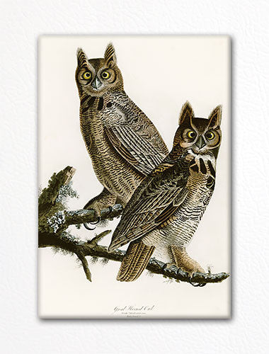 Great Horned Owl Audubon Illustration Fridge Magnet