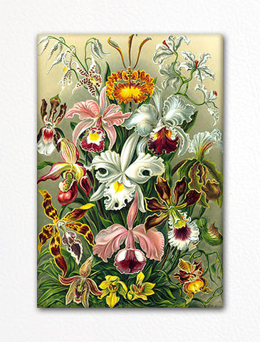 Ernst Haeckel Orchids Fridge Magnet