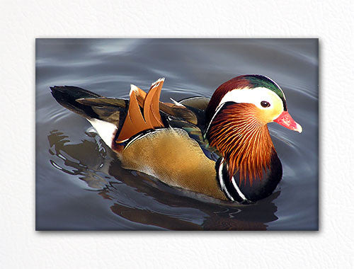 Mandarin Duck Fridge Magnet