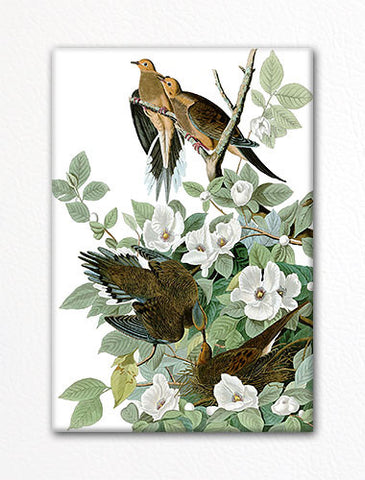Mourning Dove Audubon Illustration Fridge Magnet