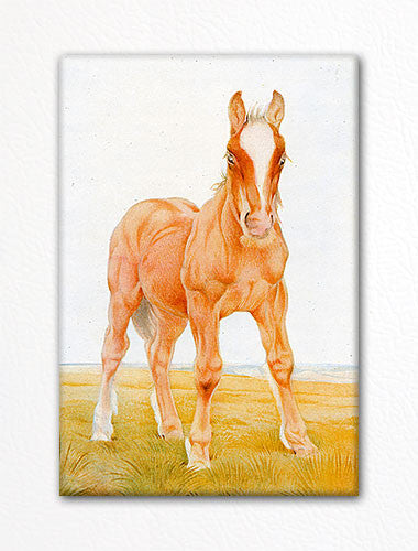 The Colt Fridge Magnet