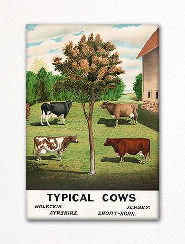 Typical Cows Fridge Magnet